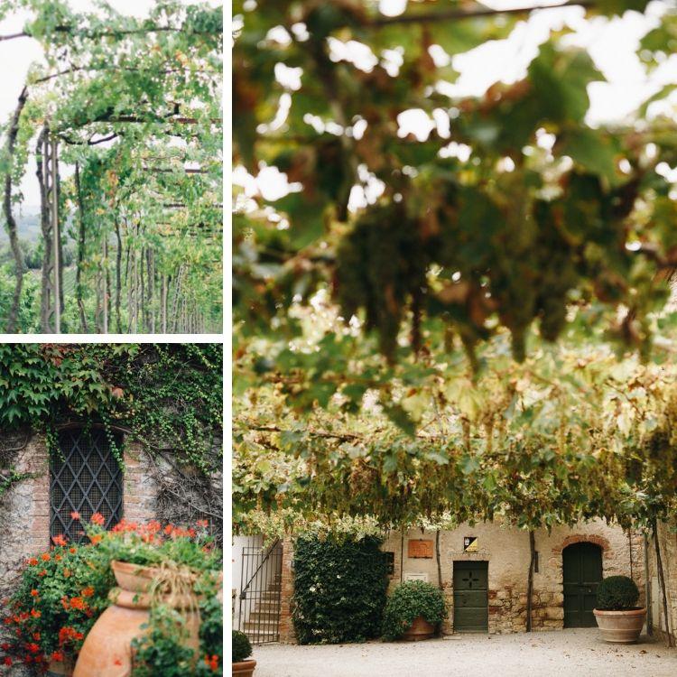 Autumn and vineyards